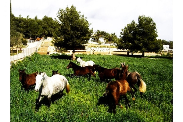 The spacious horse-paddock with some of the gorgeous horses